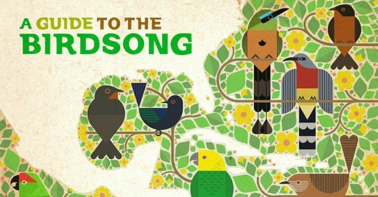 Nesli Tükenmekte Olan Kuşların Sesleri Elektronik Müziğe Dönüştü
