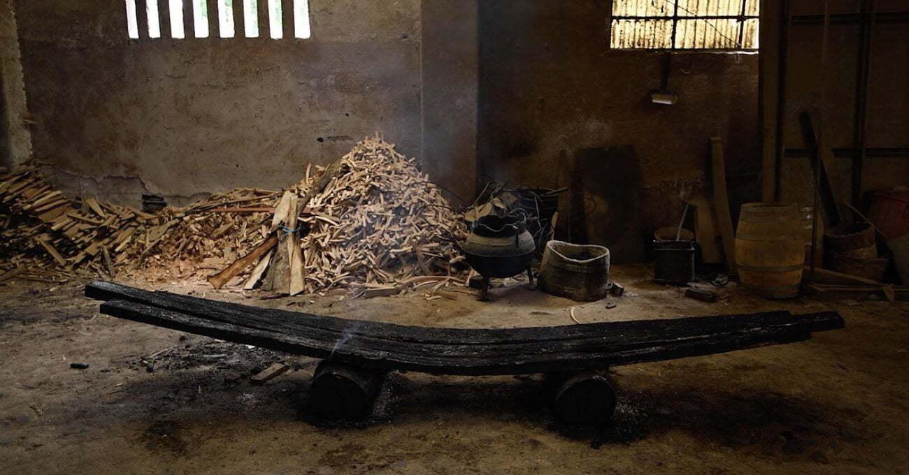 Orman Yangınlarının Yıkıcı Etkisini Yansıtan Bir Koleksiyon