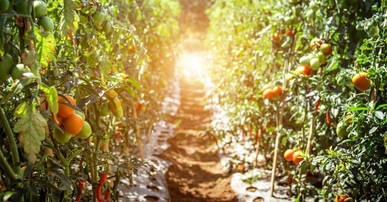 Bitkilerin Stresini Ölçerek Kuraklığa Karşı Çiftçileri Uyaran Nanosensör
