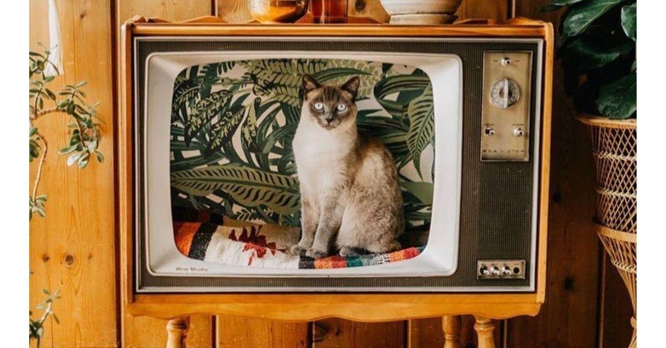Eski Televizyonlar Kedi Yatağı Oldu