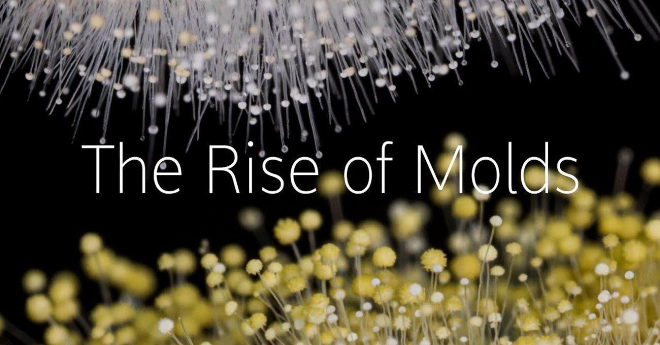 Mantarların Büyüme Sürecinden Mikroskobik Manzaralar