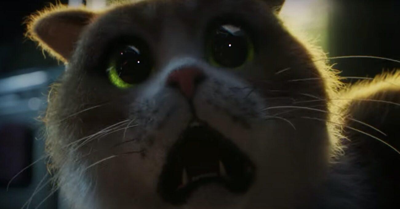 Kedilerin Korkulu Rüyası