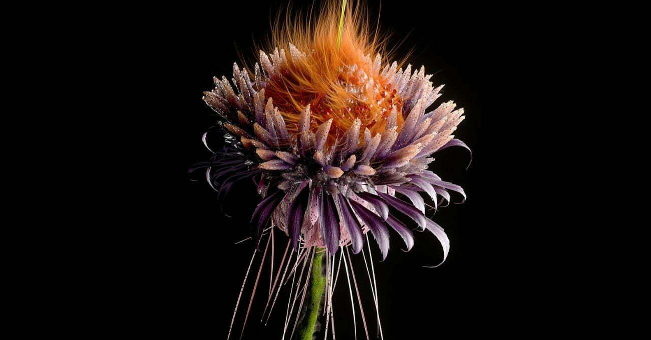 Artificial Bloom