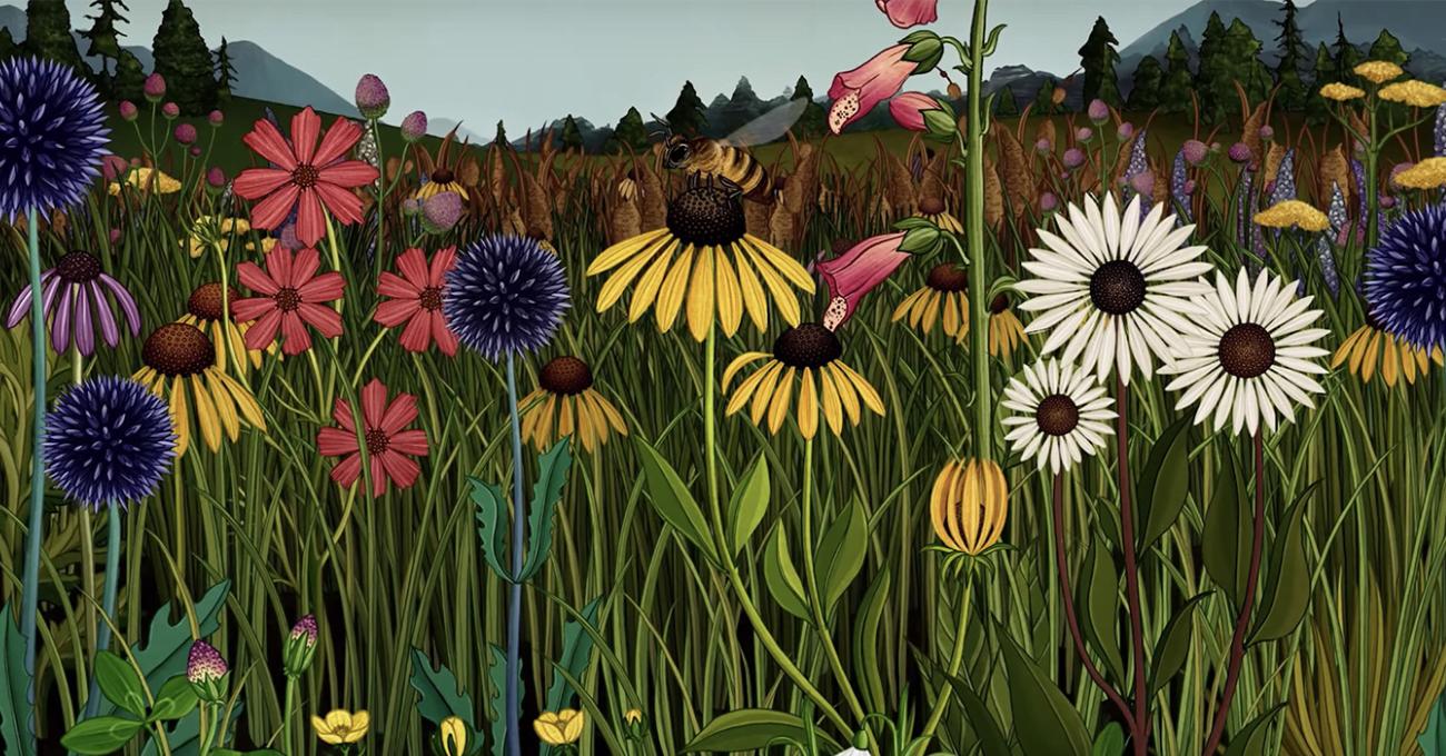 Çiçeklerin Yaşam Döngüsü