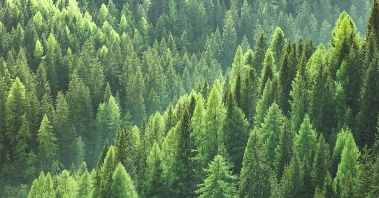 Finlandiya'nın Orman Endüstrisindeki Başarısı [SXSW 2021]