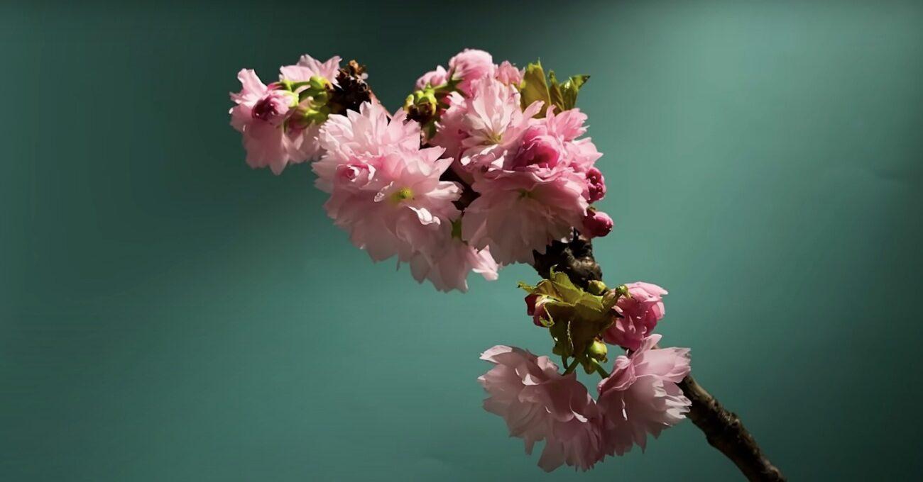 Baharın Gelişini Kutlayan Çiçekler