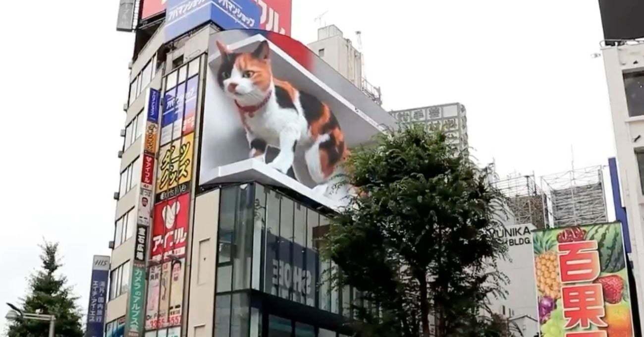Tokyo'da Sokağı İzleyen Dev Kedi