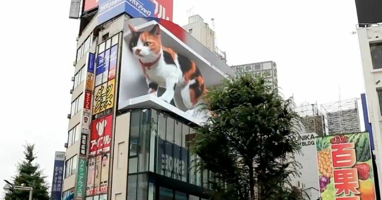 dev kedi tokyo