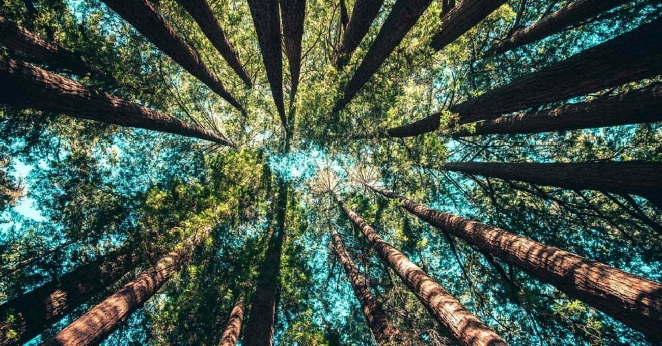 Ağaçların Şarkılarını Dinleyebileceğiniz Radyo İstasyonu